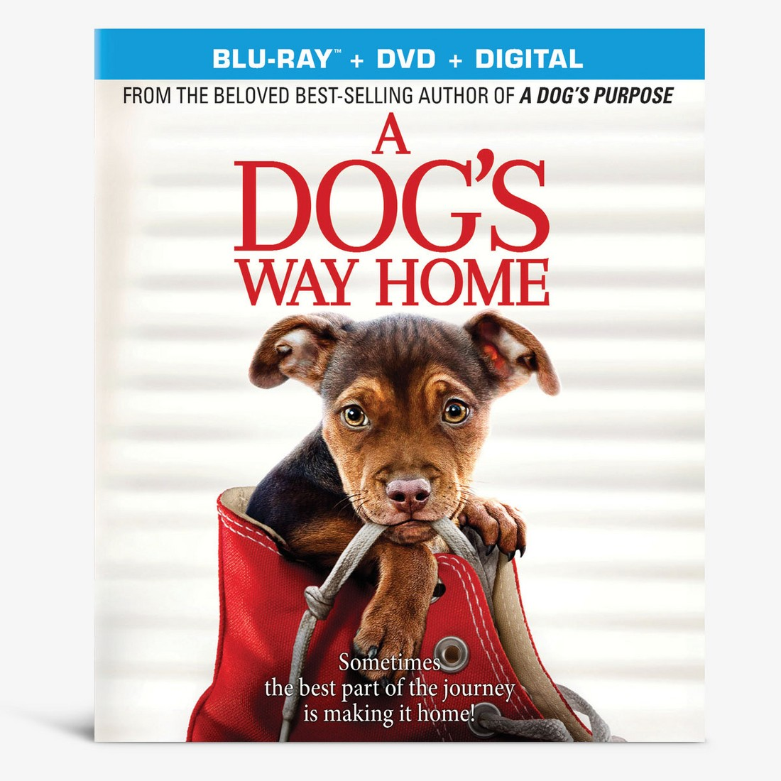 A Dog's Way Home. Blu-Ray + DVD + Digital