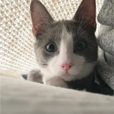 Pic of a cat named Mills